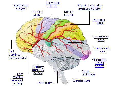 Introduction to the Musical Brain